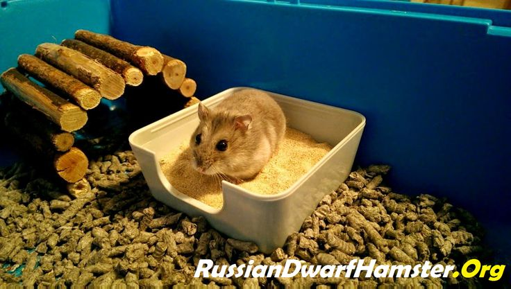 How to create a sand bath for a Russian Dwarf Hamster!!