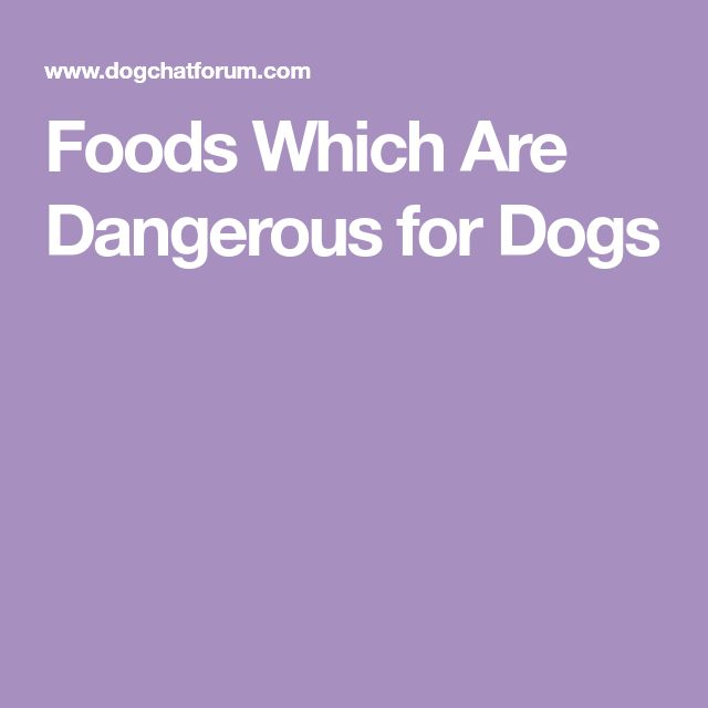 Foods Which Are Dangerous for Dogs
