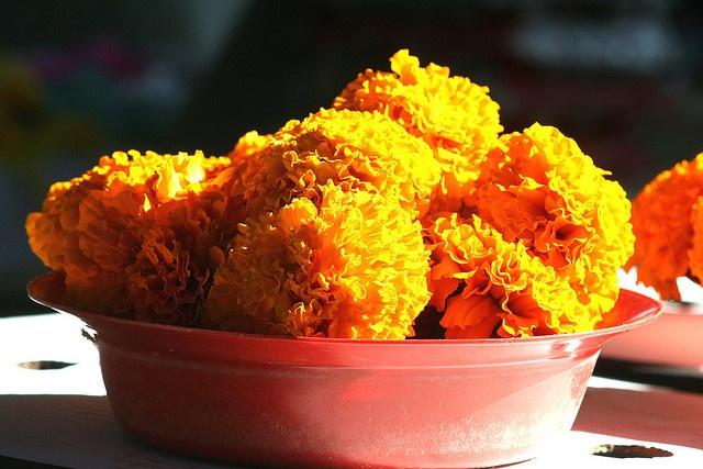 Marigolds at the Bangladesh Market in Durban