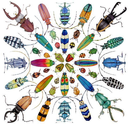 Image detail for -Lucy's Artworld: Beetles accepted