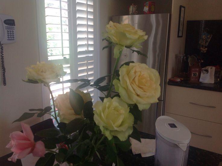 St Patrick rose (mum's garden)