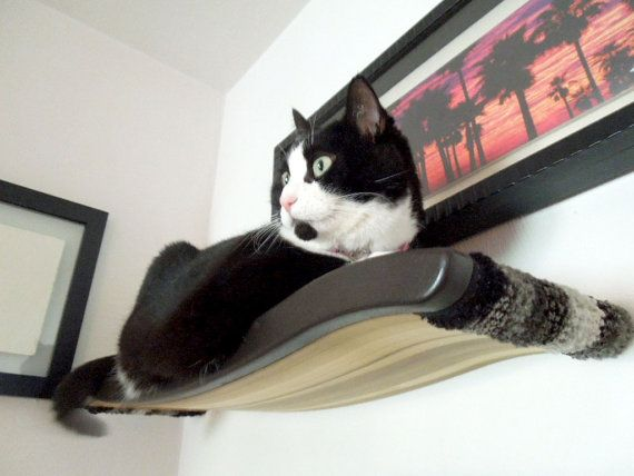 Floating Cat Cradle Shelf