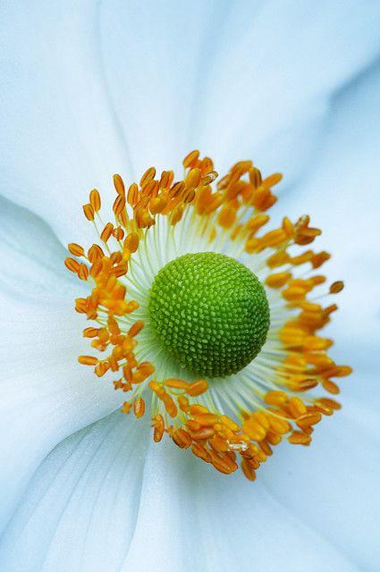 Anemone macro. outstanding.