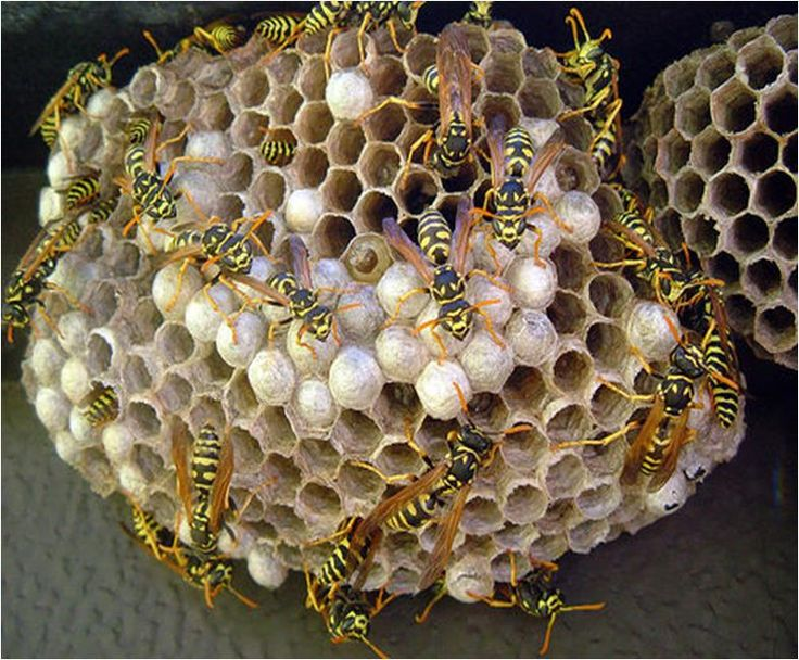 How To Get Rid Of A Wasp Nest. This Will Come In Handy! I