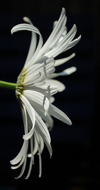 the amazing beauty and detail of God's creation - what do you love about this flower?