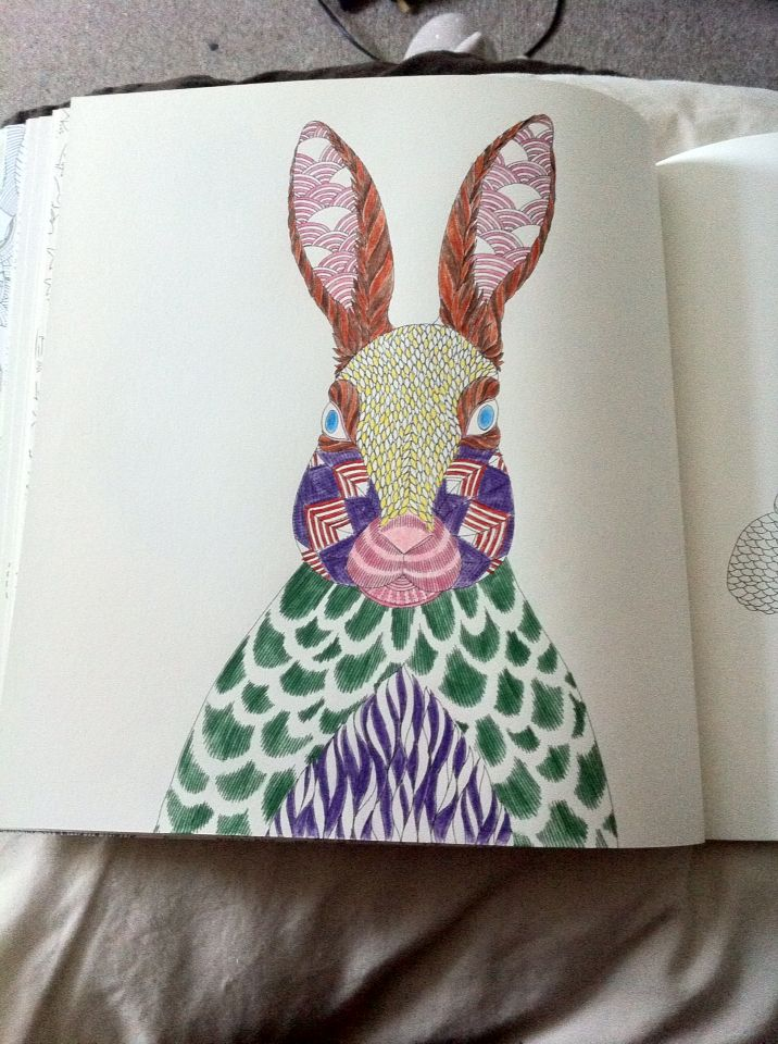 Animal Kingdom Rabbit Colouring Book