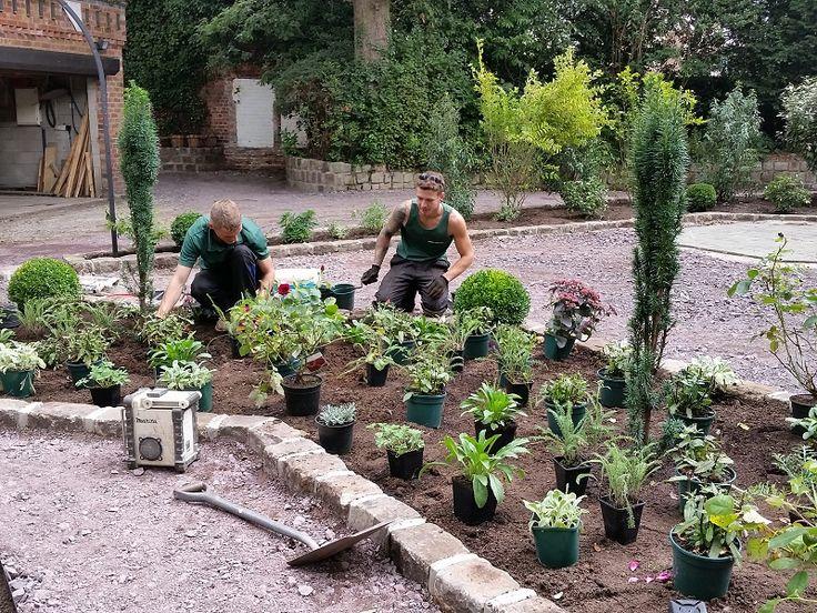 Garden Design & Planting #gardendesign #plantingdesign #shrubs #perennials #englishgarden #victoriangarden #roses #boxballs #taxusbaccatafastigiata #shrubs #evergreenshrubs #lavender #gardendesigncheshire #plantingdesigncheshire
