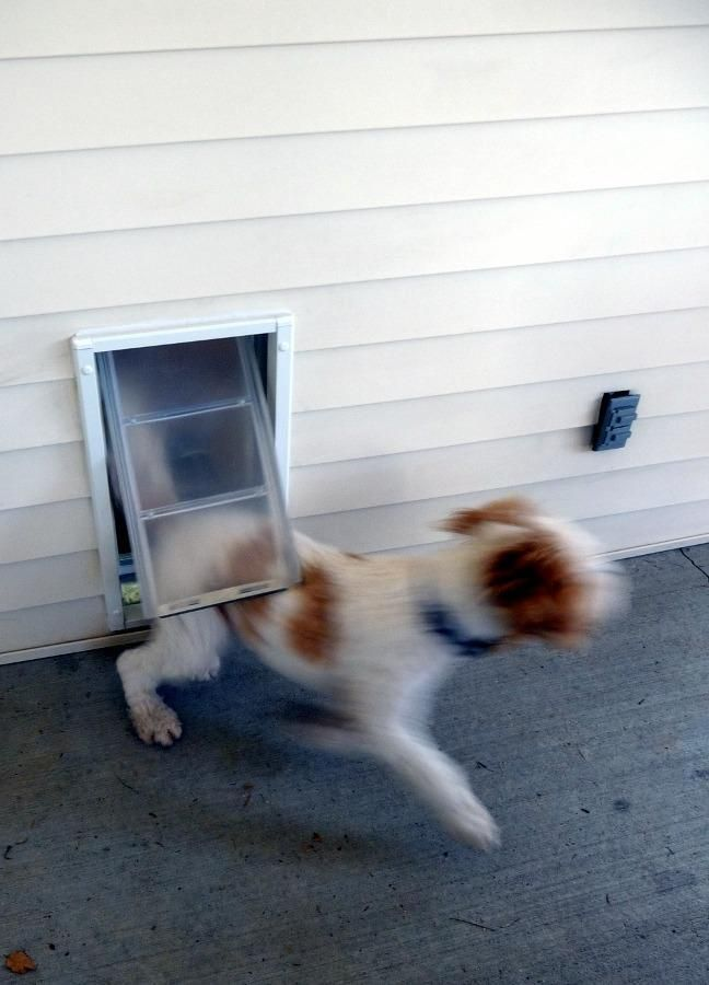 White Aluminium Framing Installed Into Stucco Siding And Other Exterior Wall Materials In Your Home Best Automatic Dog Do Automatic Dog Door Exterior Wall Materials Dogs