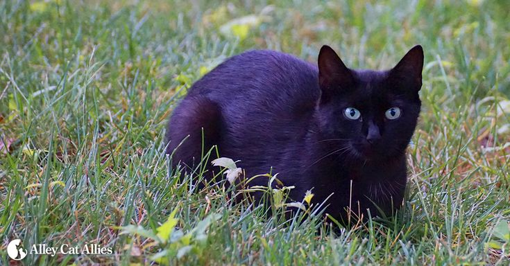 Alley Cat Allies | Feral and Stray Cats—An Important Difference