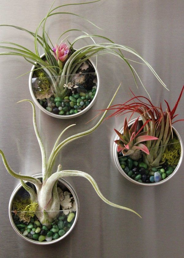 25 Best Ideas About Air Plant Display On Pinterest Air Plants Gardening Magazines And Hanging Air Plants Diy