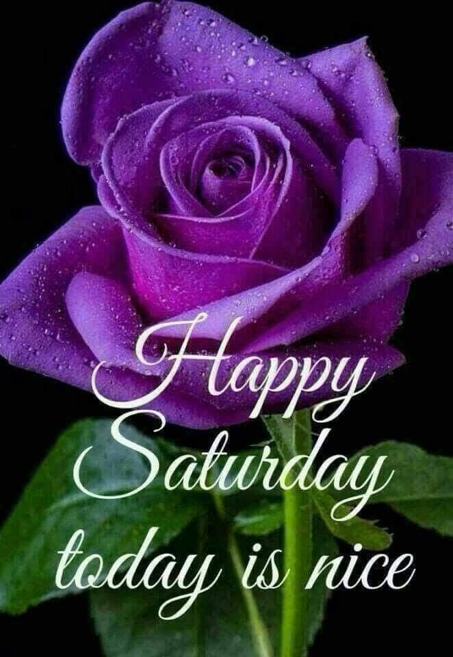 Today is nice saturday saturday quotes happy saturday saturday images |  Good morning happy saturday, Saturday greetings, Good morning flowers