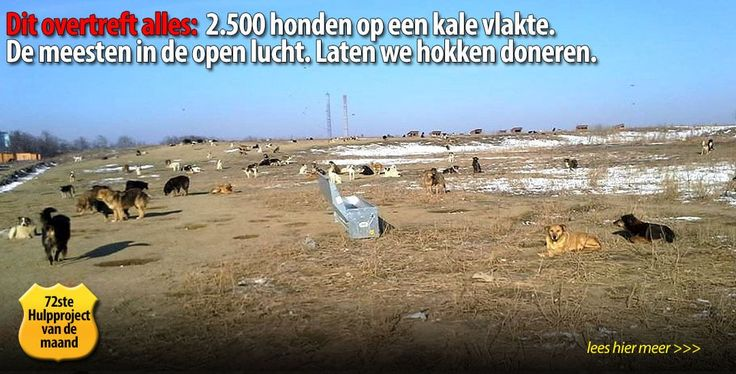 Dit enorme grote asiel met al die dieren verdient echt ons aller steun!  Doneer daarom alstublieft vandaag nog voor deze actie naar onze bankrek. NL16 INGB 0004 7841 60 t.n.v. Stichting Dierennood o.v.v. 'Bacau' en wij zorgen dat uw donatie voor 100% voor dit goede doel besteed zal worden.  - See more at: http://dierennood.nl/2500-honden-op-een-vlakte-in-roemenie/#sthash.wcxBknad.dpuf