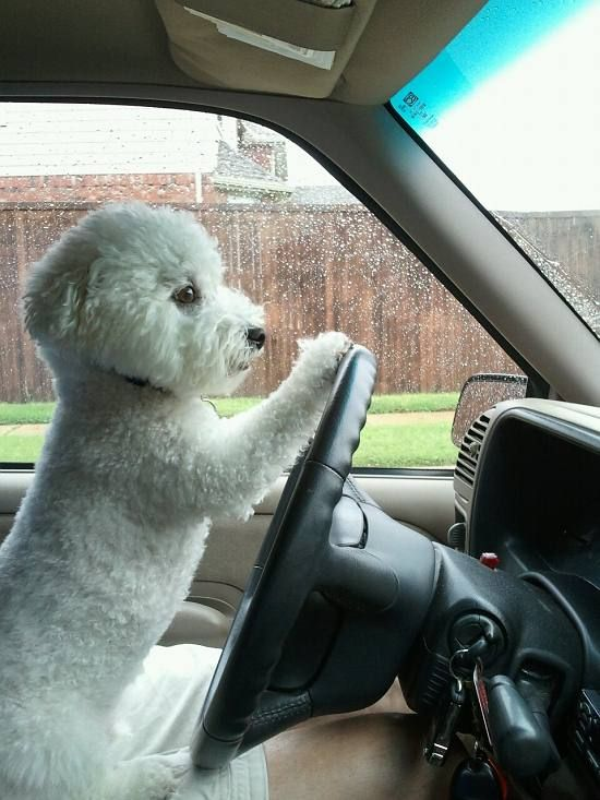 Keep your eye's on the road , paws on the wheel !