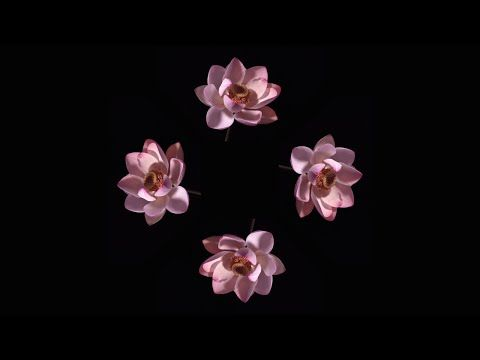 Blooming Flowers - Pyramid Hologram Screen Up - YouTube