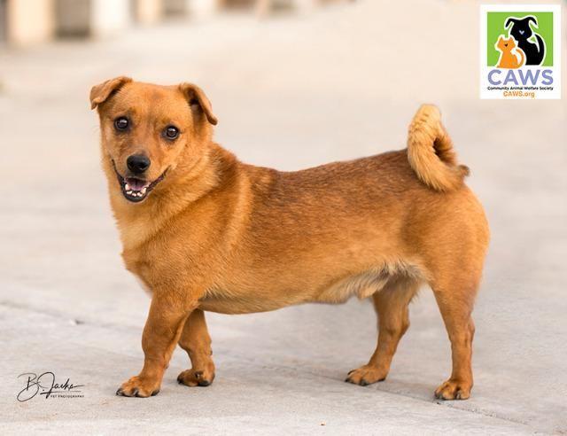 Chug Dog For Adoption In Salt Lake City Ut Adn 687117 On