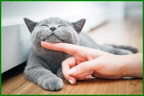 Daftar Nama Kucing Korea Beserta Artinya Daftarhewan Com Di 2020 Kucing Mainan Untuk Kucing Piaraan