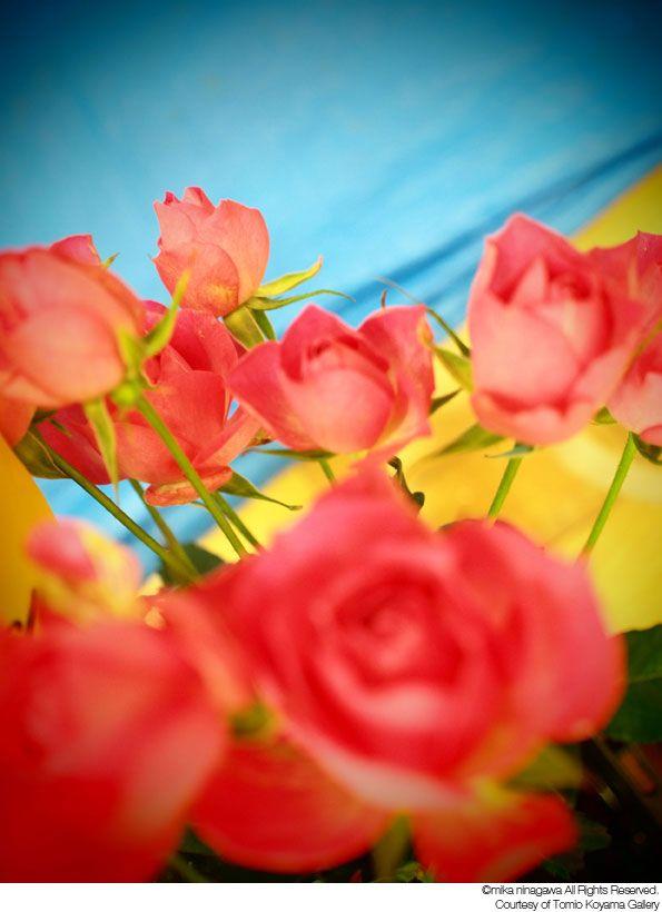 今夏、<蜷川実花展>が『金津創作の森』にて開催決定。D[diː]の写真も展示。 | D[di:] official web site
