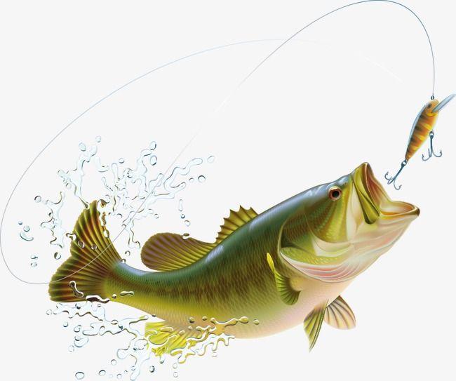 Cartoon Vector Fish Splash And Spray Fish Clipart Splash Clipart Spray Splash Png And Vector With Transparent Background For Free Download Peixe Recheado Peixe Desenho Splish Splash