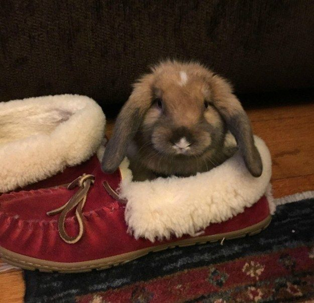 Everything in your house belongs to your rabbit, he just simply lets you borrow his things (every once in a while). | 19 Things Every Bunny Lover Understands