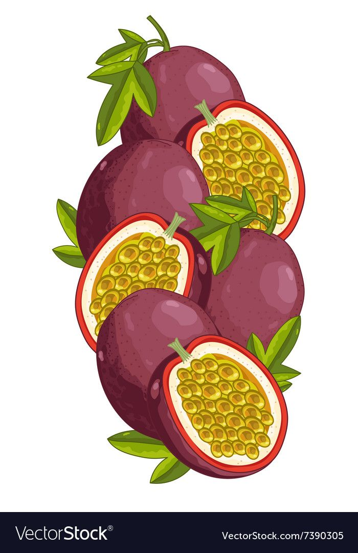 Passion Fruit Isolated Composition Royalty Free Vector Image Passion Fruit Fruits Images Fruit Illustration