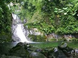 Siempre y cuando la gente sólo pueda ganarse la vida talando el bosque tropical, lo harán. De cualquier manera que tratemos de salvar el bosque tropical ...