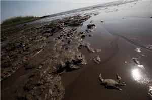 Gulf seafood deformities alarm scientists - Features - Al Jazeera English