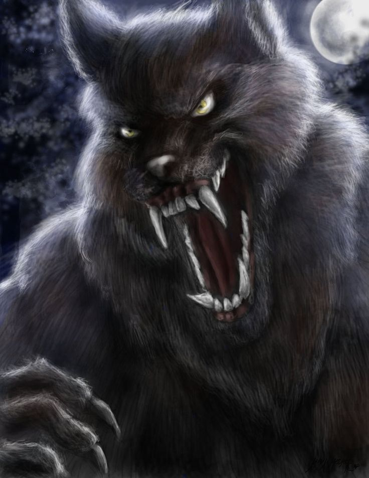 653 best images about Cursed on Pinterest | Wolves, A wolf ...