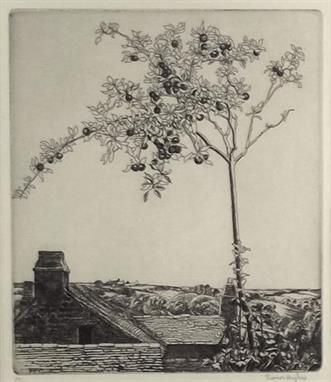 ELEANOR HUGHES. The Little Apple Tree, etching. Eleanor was a member of the Newlyn School