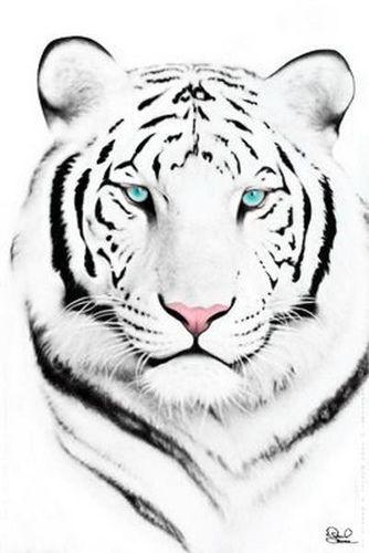 White tiger face | okie_dokie_artichokie | Flickr