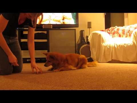 It's Yer Choice: Teaching Self Control | Dog Trainer Games