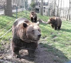 Výsledek obrázku pro obrázky medvědů beroun