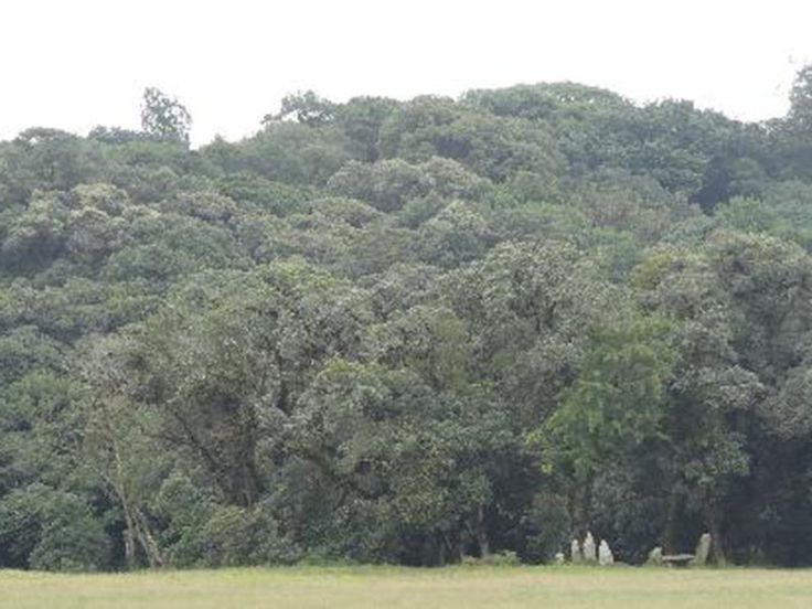 Mawphlang Sacred Forest - in Meghalaya, India