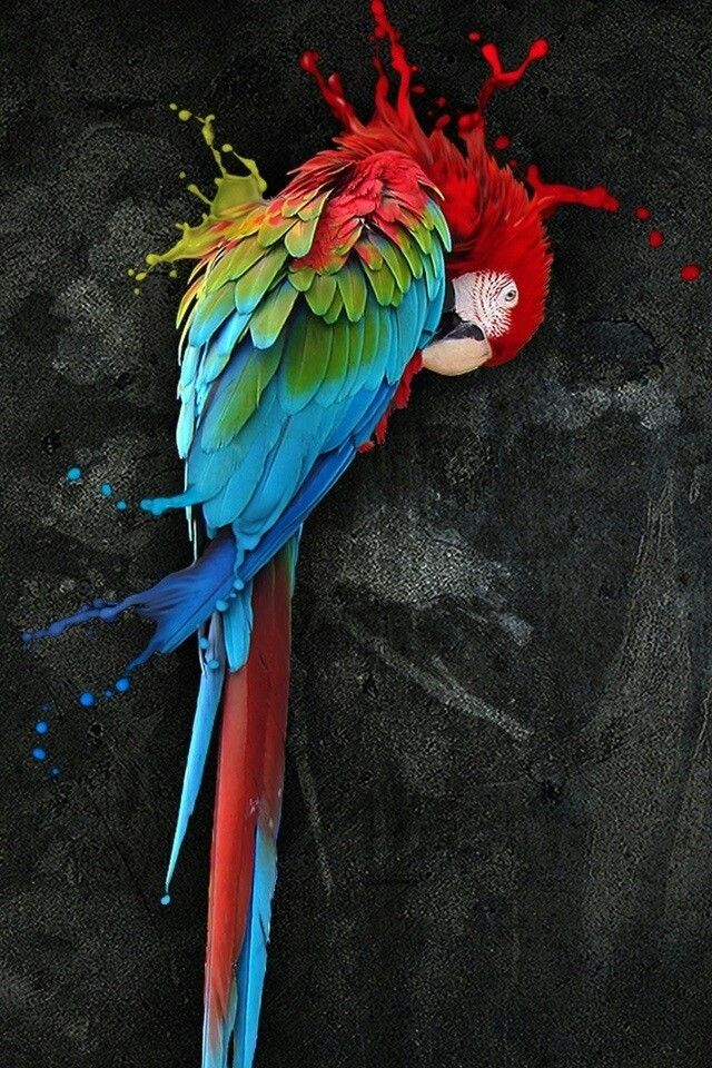 Painted macaw