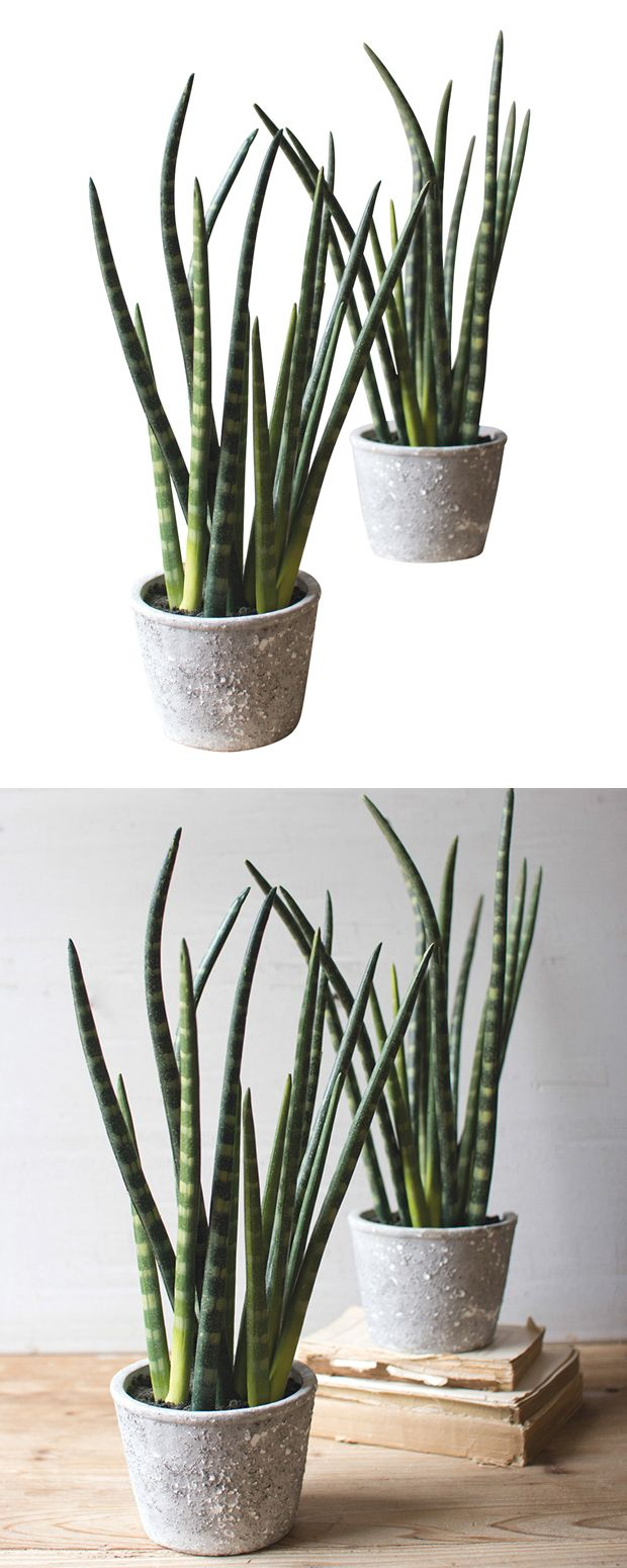 One look at this Chaco Canyon Faux Plant and you'll be sold. Infuse a…