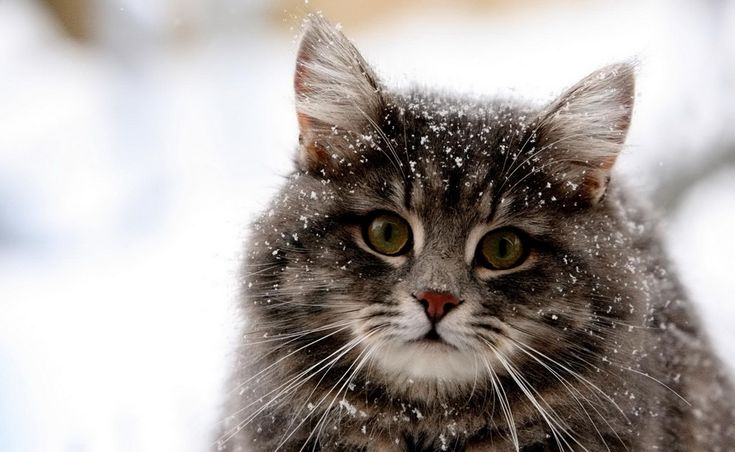 The cutest photoset of kittehs in the snow
