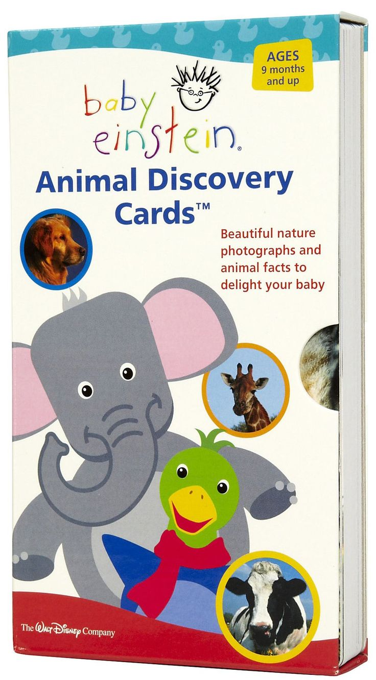 Baby Einstein Animal Discovery Cards Baby Einstein Discovery Card Animal Facts