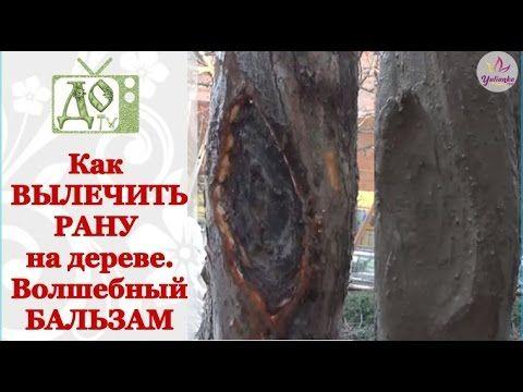 Как вылечить РАНУ на плодовом дереве. Рецепт целебного бальзама для дерева - YouTube