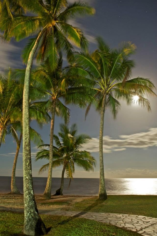 ✮ Palm Cove Full Moon, Palm Cove, Cairns, Queensland, Australia...THE exact spot I got married - that path was my isle - and where we had our reception. It was a full moon that night, too!