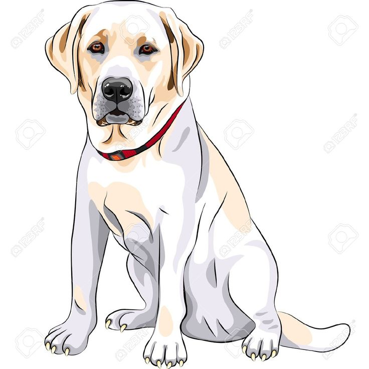 28 best perros images on Pinterest  Animals Drawings and Dogs