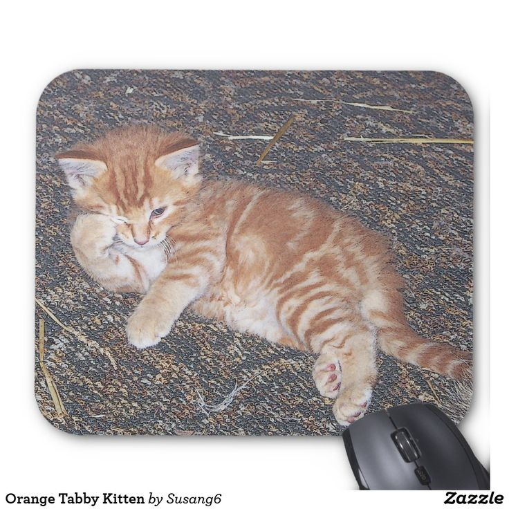Orange Tabby Kitten Mouse Pad