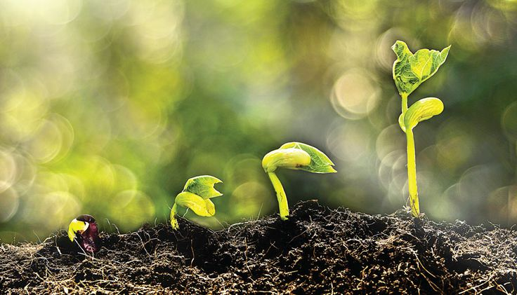 Technology: The Missing Link in Pakistan's Agriculture Sector