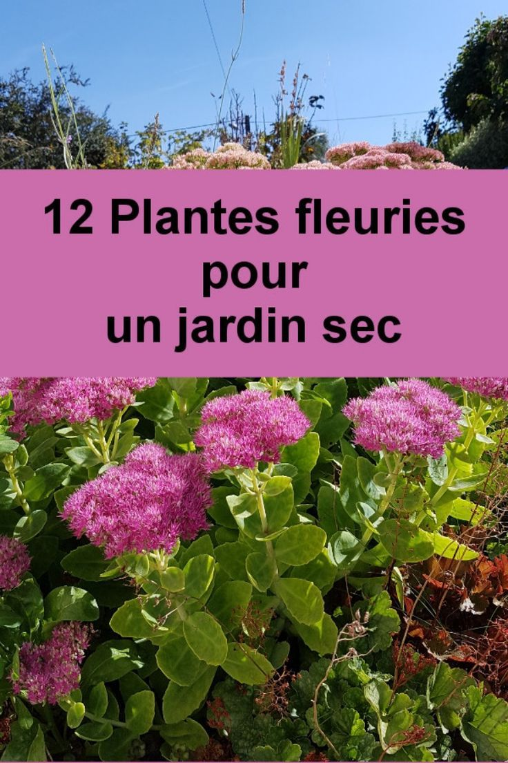 Plante Méditerranéenne Sans Arrosage 12 vivaces sans arrosage | jardin facile, jardin d'eau et