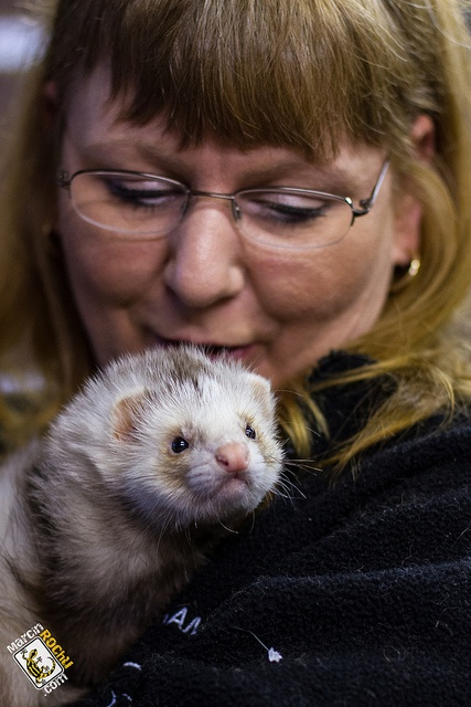 Wolverhampton Ferret Rescue20 Ferret, Wolverhampton, Photo