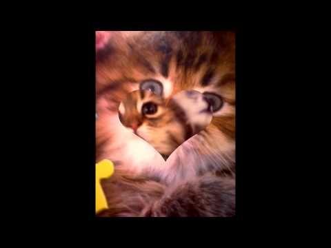 bacodes5 photos custumize - YouTube