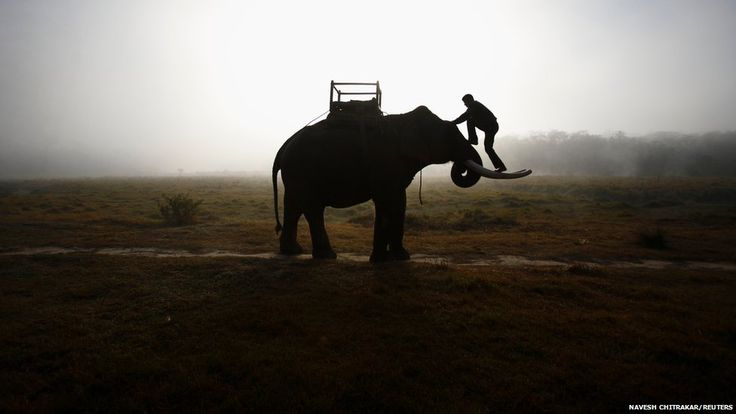 A mahout climbs his elephant as he heads towards the Chitwan National Park at Sauraha in Chitwan