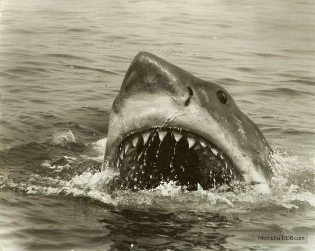 jaws movie stills | copyright by universal studios and other respective production studios ...