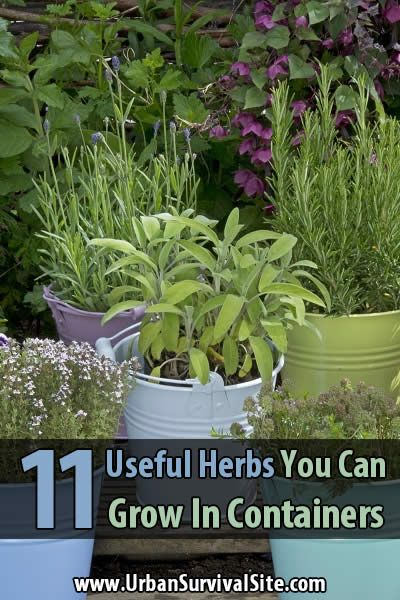 The great thing about medicinal herbs is you don't have to stock up on a huge supply. You can grow them throughout the year and harvest what you need.