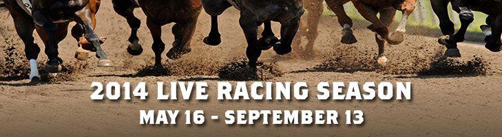 horse racing / gambling