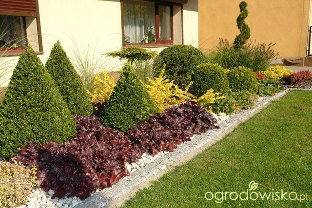 Ogród mały, ale pojemny;) - strona 61 - Forum ogrodnicze - Ogrodowisko