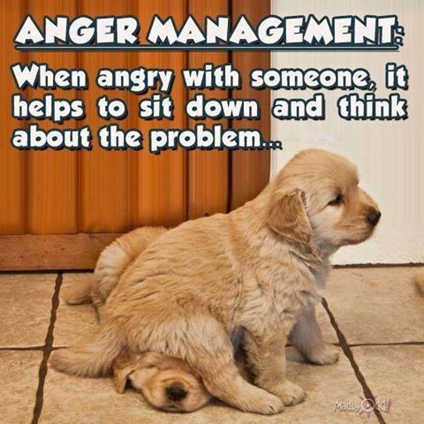 When Angry With Someone... funny quotes quote angry jokes lol funny quote funny…